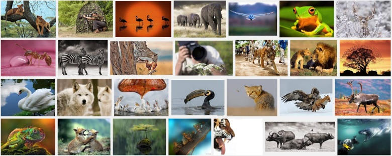 10-best-wildlife-photography f